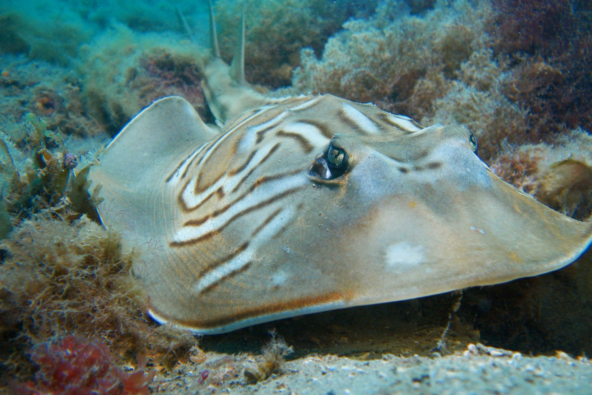 Dive with amazing marine life on our guided dives